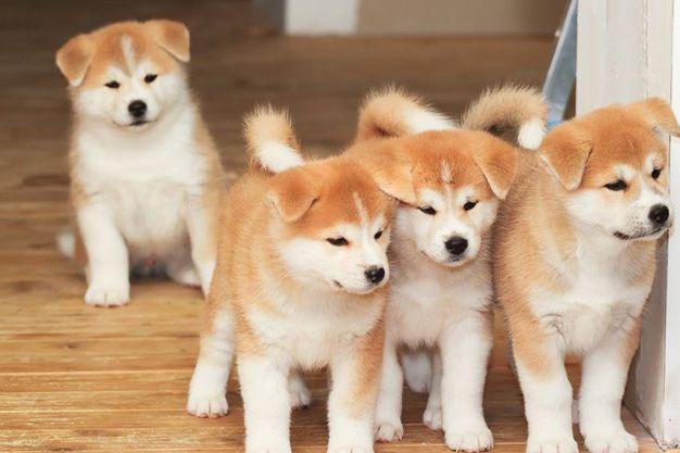 Los 3 perros más caros del mundo