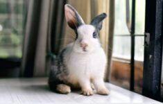 ¿Los conejos son animales solo de jaula?