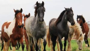 Los 5 caballos mas caros del mundo